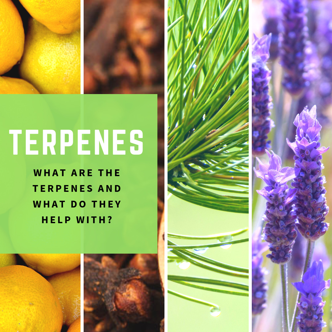 WHAT ARE THE TERPENES AND  WHAT DO THEY  HELP WITH?